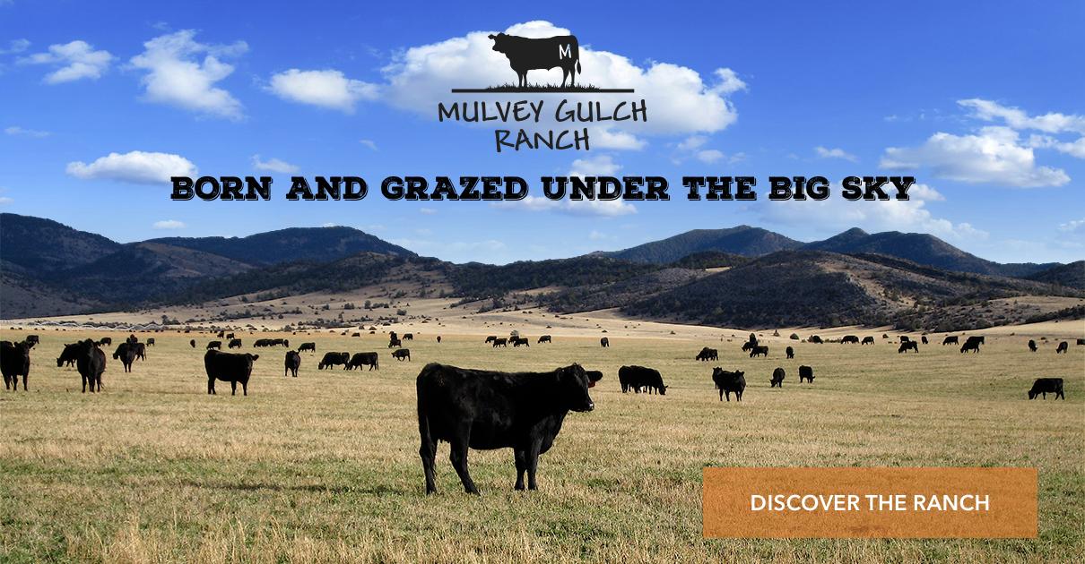 MGR Glider_Ranch4